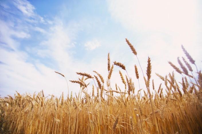 Застраховка на селскостопанска продукция